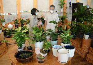 観葉植物や新作の鉢カバーなどが並ぶ癒やしのグリーンフェア=有田町原明の深川製磁チャイナ・オン・ザ・パーク