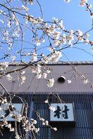 復興告げる十月桜 嬉野温泉旅館「大村屋」で見頃
