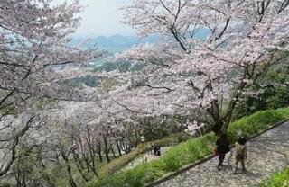 千本桜(吉野ケ里町・籾岳)