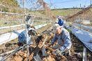 休耕田で自然薯栽培 定年後の趣味や健康維持兼ね