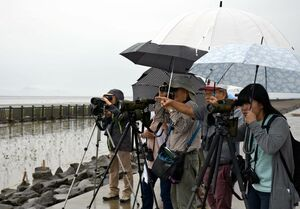 野鳥を観察する参加者=佐賀市東与賀町の東よか干潟