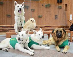 医療現場や福祉施設などに慰問して癒やしを提供するセラピー犬=佐賀市呉服元町の656広場