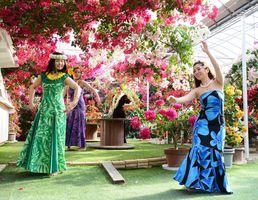 咲き乱れるブーゲンビリアの花に囲まれて舞うフラガール=唐津市浜玉町のブーゲンの森