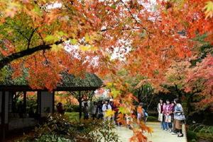 鮮やかに紅葉した木々が見ごろを迎え、秋色に染まる九年庵=神埼市神埼町