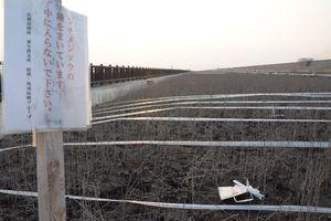 種をまいたものの、発芽しなかったシチメンソウヤード=佐賀市東与賀町の東与賀海岸
