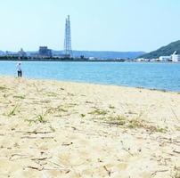 ハマヒルガオの姿が見えなくなった砂浜=唐津市の西の浜