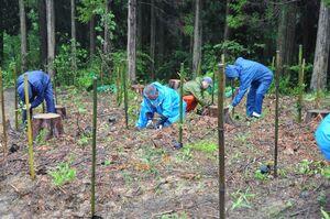 雨の中植樹する参加者ら=佐賀市富士町の21世紀県民の森