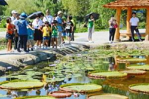 百済の武王が造った人工の池「宮南池」に浮かぶハスの葉に驚く児童生徒たち=忠清南道扶余郡の宮南池