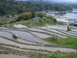 岩田屋三越が地元農家と協力し、米作りを始める大浦の棚田=唐津市肥前町