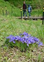 帯隈山の麓で紫色のかれんな花を咲かせているエヒメアヤメ=佐賀市久保泉町