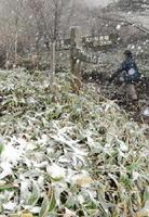 樹木や登山道に雪がうっすらと積もった天山=15日午後3時半ごろ