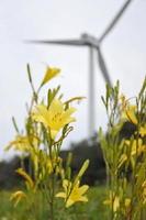 鮮やかな黄色い花を咲かせるユウスゲ。奥は風力発電所の風車=唐津市鎮西町串崎