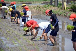 泥の感触を楽しみながら苗を手植えする児童たち=みやき町の三根東小学習田