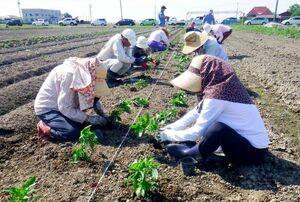 作付けを通して有機農業を学ぶ参加者(過去の研修会から)
