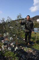 耕作放棄地でユーカリを育てる「のいばる養秀会」の代表岡本泰成さん=唐津市七山