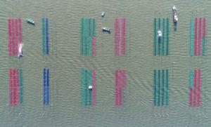 ノリの種付きが始まり、海を色とりどりの網が彩る=佐賀県沖の有明海
