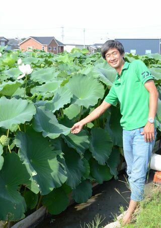 <未来を拓く(13)>白石町の大規模レンコン農家 香月雅雄さん