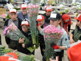 威勢のいいかけ声が響く中、次々と取引されるカーネーション=6日朝、佐賀市の佐賀花市場