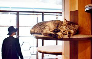 保護猫の譲渡施設では最大30匹の猫が過ごすことができる=佐賀市兵庫南のフラットプラス&Myao