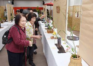 茶花の凜とした魅力を鑑賞する来場者=みやき町コミュニティーセンター「こすもす館」