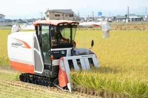さがびより米スター・船津直行さんのほ場でたわわに実った稲を刈り取る息子の光生さん=佐賀市久保田町