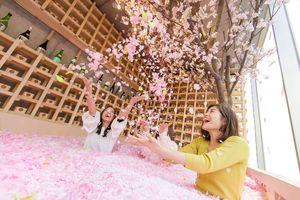 室内で体験型の花見が楽しめる「サクラチルバー」(提供写真)