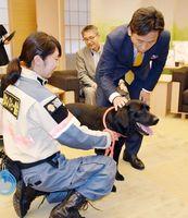 進出協定締結式で災害救助犬の「J」と触れ合う山口知事(右)=佐賀県庁