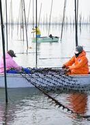 有明海ノリ、冷凍網張り込み始まる 4日までに約30万枚