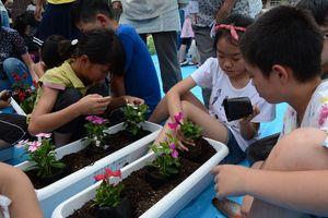 人権の花の苗をプランターに植える児童たち=有田町の有田小