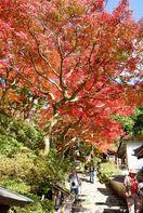 庭園に紅葉鮮やかに 大興善寺に秋の訪れ