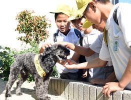 登下校する児童たちからかわいがられる「シュン君」=神埼市神埼町永歌