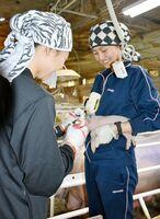 慣れた手つきで子豚の世話をするホアさん(右)とディエムさん=小城市の野村畜産