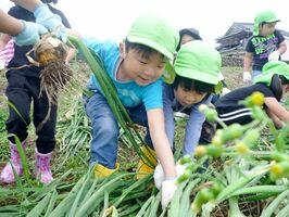 タマネギ掘りを楽しむ園児たち=有田町上山谷(提供)