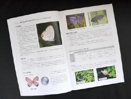 タイワンツバメシジミの生態や特徴、保全活動をする上で知っておくべき事などをオールカラー写真で紹介している冊子