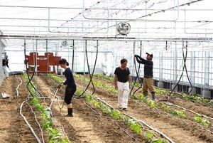 いち早く稼働を始めたキュウリのトレーニングファーム。2018年度にはイチゴとトマトの施設整備が計画されている=17年10月、武雄市