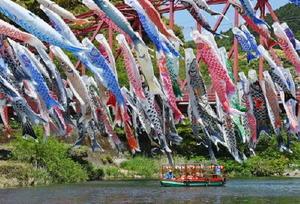 新緑に包まれた川上峡で色とりどりのこいのぼりが風に揺れる=4日午前、佐賀市大和町