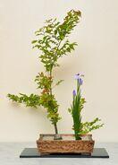 〈今週の花〉 緑陰 古川秀子(嬉野市)大和池坊