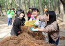 虹の松原守る「クリーン大作戦」 中高生ら松葉を掃除