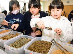 柿の葉や甘草など、8種類のお茶の元から自分の好きなものを詰める児童=唐津市の相知小