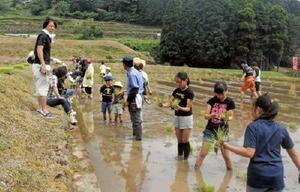 田んぼの心地よい感触を楽しみながら酒米を植えていく参加者=伊万里市二里町の炭山の棚田