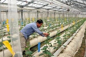最適な栽培条件にするための装置が設置されたキュウリのハウス。研修では、移住就農者に高収量・高品質を実現するノウハウを伝授する=武雄市