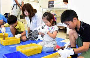 真剣な表情で作業を進める子どもたち=佐賀市金立町の東名縄文館