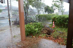 台風の影響とみられる倒木でふさがれた歩道=午後3時35分ごろ、有田町立部