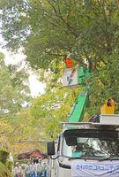 ドローンで上空から確認し、高所作業車を使い多久聖廟(左奥)へ続く参道の樹木を伐採する九電工の社員ら=多久市多久町
