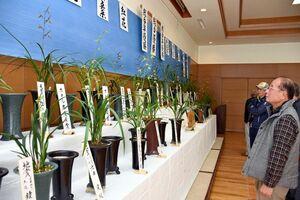 会員が丹精込めて育てた150鉢が並ぶ武雄愛蘭会の寒蘭展示会=武雄市の山内公民館