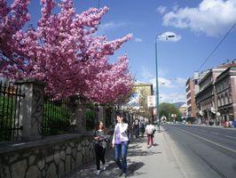 イピル・イピルの会が植えた桜が咲き誇るハスタハナ公園(右)=2018年4月、サラエボ市内