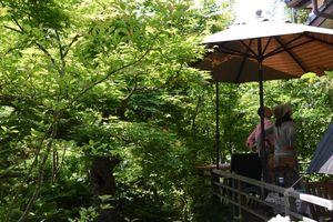 「木漏れ日の中でコーヒーを飲む」をテーマに庭造りしている栁川さん宅の庭園=神埼市神埼町
