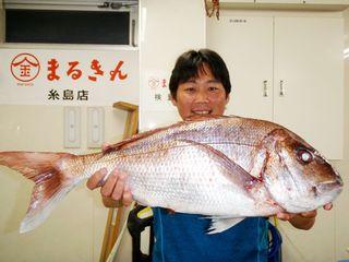 福岡の中村さん、良型マダイ 呼子沖で71.3センチ