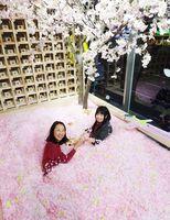 120万枚の桜の花びらに埋もれ、佐賀の地酒を楽しむ女性=東京・表参道のZeroBase表参道