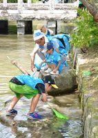 真剣な表情で魚を探す参加者=佐賀市の松原川